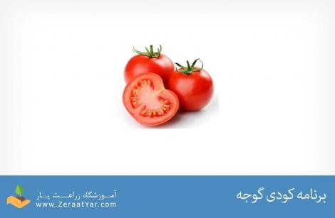 برنامه کودی گوجه فرنگی