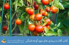 کتاب آفات و بیماری های مهم گوجه فرنگی
