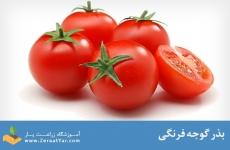 بذر گوجه فرنگی سی اچ