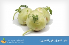 بذر کلم زراعی (قمری)
