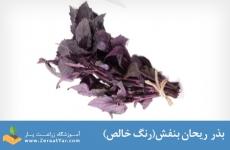 بذر ریحان بنفش(رنگ خالص)