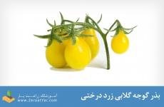 بذر گوجه گلابی زرد
