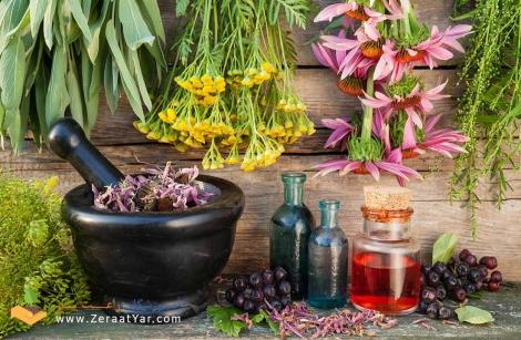 کتاب PDF آموزش کاشت گیاهان دارویی
