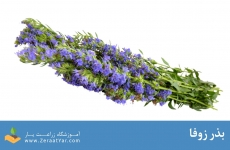 بذر زوفا